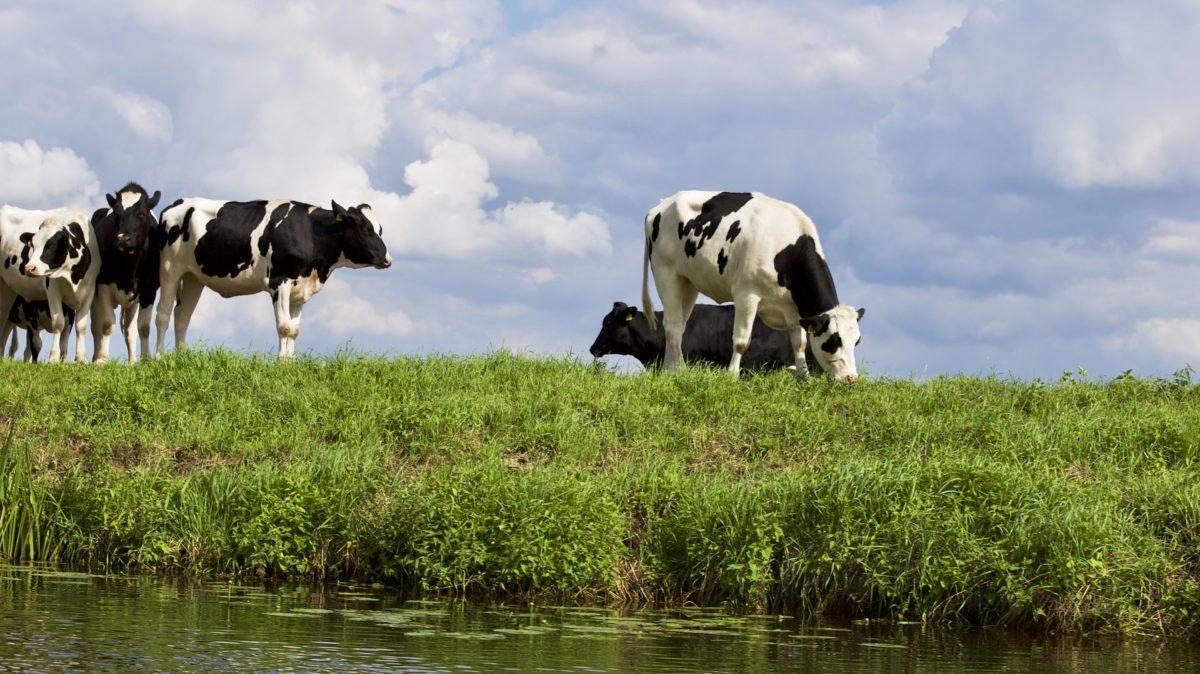 Fotowedstrijd 'Dit is Groningen'